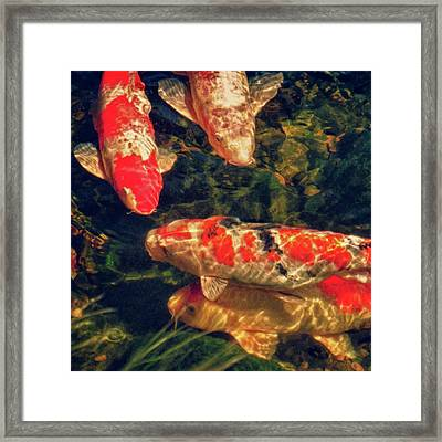 Koi Fish Fresco Square Edition Framed Print by Tony Grider