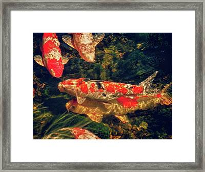 Koi Fish Fresco Two Framed Print by Tony Grider