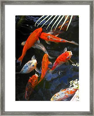 Koi Fish II Framed Print by Elizabeth Hoskinson