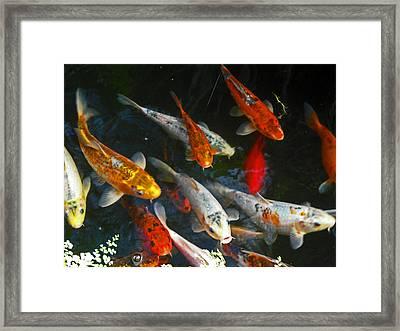 Koi Fish IIi Framed Print by Elizabeth Hoskinson