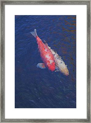 Koi Fish Partners Framed Print