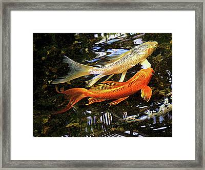 Koi Fish Swim In Synch Framed Print