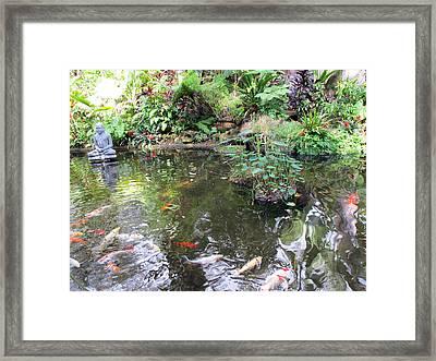 Koi Garden Framed Print by Loretta Luglio