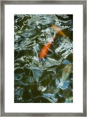 Koi I Framed Print