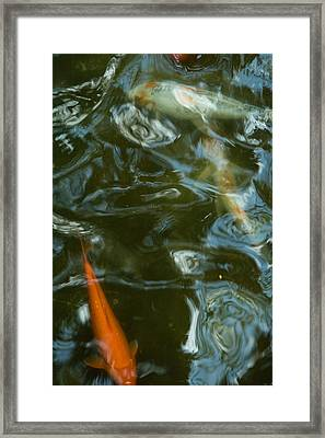 Koi II Framed Print