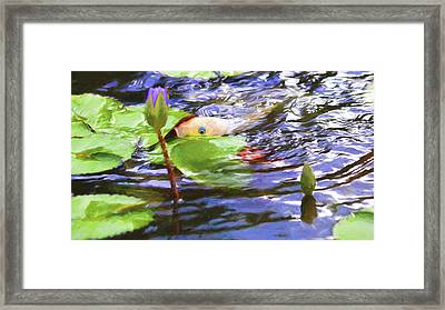 Koi Impression Framed Print by Carol R Montoya