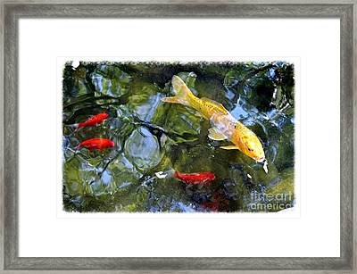 Koi Pond 2 Framed Print