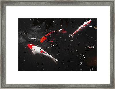 Framed Print featuring the photograph Koi Trio 1 by Deborah  Crew-Johnson