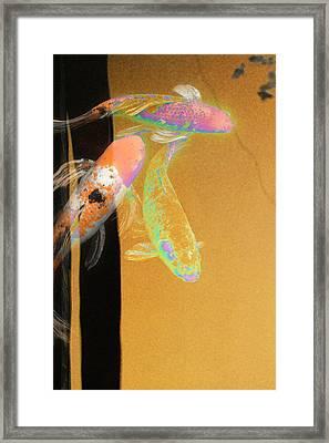 Koi Vi Yellow Framed Print