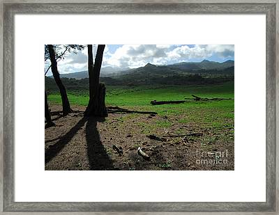 Koki Pasture Framed Print