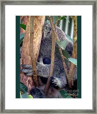 Koko Framed Print by Carolyn  Wright