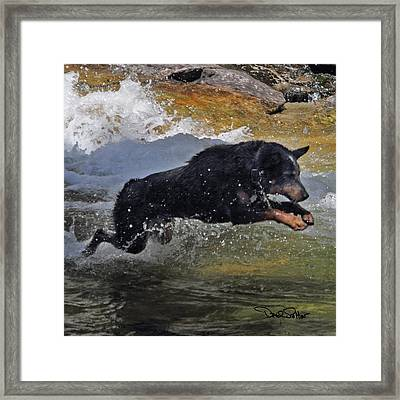 Kolt Leaping Framed Print