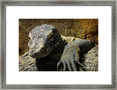 Komodo Dragon Framed Print