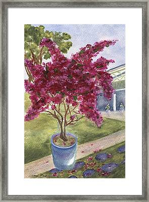 Framed Print featuring the painting Kona Bougainvillea by Jamie Frier