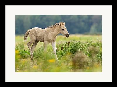Equus Caballus Framed Prints