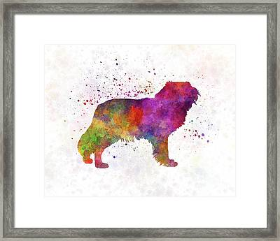 Kooikerhondje In Watercolor Framed Print
