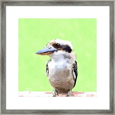 Kookaburra Framed Print by Chris Butler