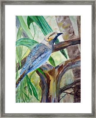 Kookaburra Dalcelo Leachii Framed Print