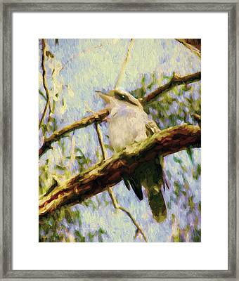 Kookaburra Laughing Bird  Framed Print by Georgiana Romanovna
