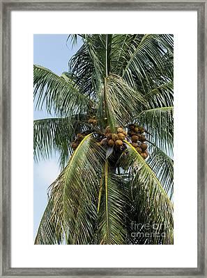 Kooky For Coconuts Framed Print