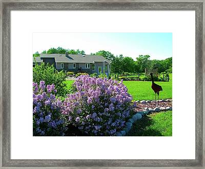 Framed Print featuring the photograph Korean Lilacs And Sandhill Crane by Randy Rosenberger