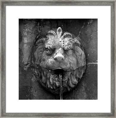 Koreshans Lion Framed Print by David Lee Thompson