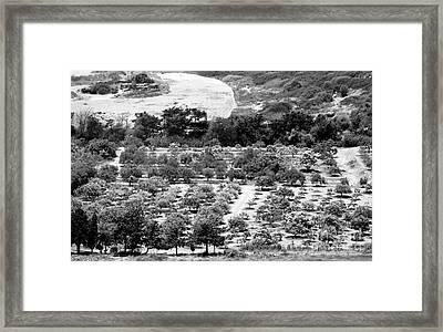 Kourion Farm Framed Print