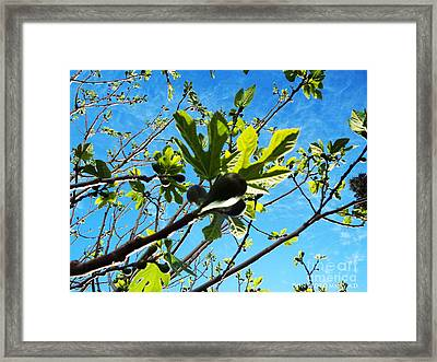Figtree Leaves Framed Print by Don Pedro De Gracia