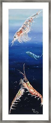Krill Framed Print