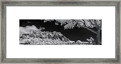 Kualoa Pods N Palms Framed Print