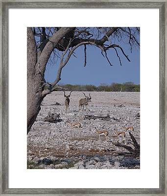 Framed Print featuring the photograph Kudu And Springbok 2 by Ernie Echols