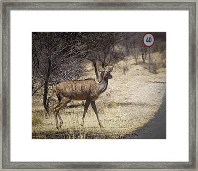 Framed Print featuring the photograph Kudu Crossing by Ernie Echols