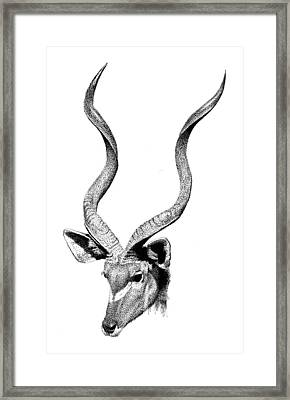 Kudu Framed Print