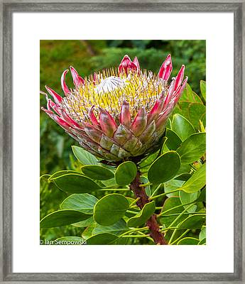Kula Breeze Framed Print