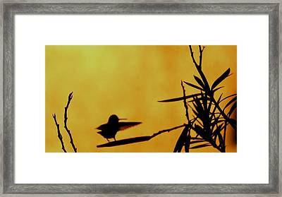 Kung Fu Bird Framed Print by Snehal Singh