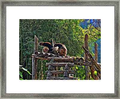 Kung Fu Panda. The Cry Of Love Framed Print