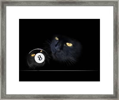 Kuriouskat Framed Print by Draw Shots