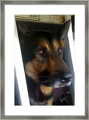 Kwi - Police K-9 Framed Print by Robert Smith
