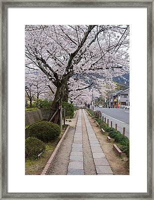 Kyoto In Bloom Framed Print
