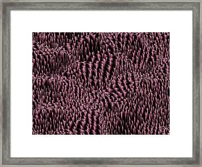 L3-24-251-175-200-4x3-2000x1500 Framed Print