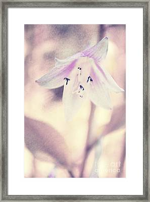 La Belleza Framed Print by Angela Doelling AD DESIGN Photo and PhotoArt