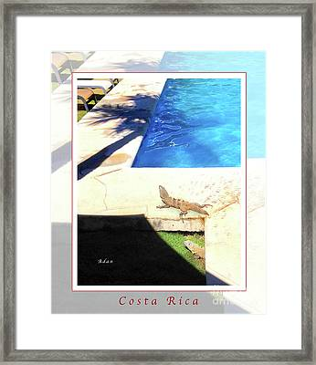 la Casita Playa Hermosa Puntarenas Costa Rica - Iguanas Poolside Greeting Card Poster Framed Print by Felipe Adan Lerma