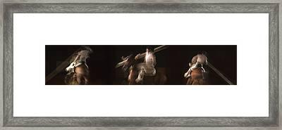 La Garrocha Framed Print