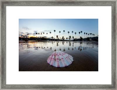 La Jolla Shore Shell Framed Print by Sean Davey