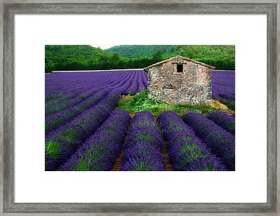La Lavande Framed Print