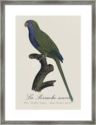 La Perruche Souris / Monk Parakeet- Restored 19th Century Illustration By Jacques Barraband  Framed Print by Jose Elias - Sofia Pereira