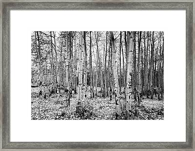 La Sal Aspen Black And White Framed Print by Mark Kiver