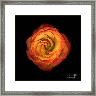 La Vie En Rose Framed Print