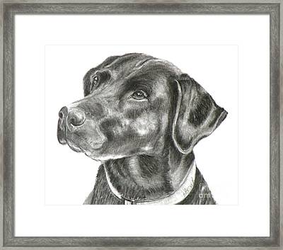 Lab Charcoal Drawing Framed Print