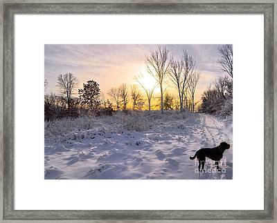 Lab In The Snow Framed Print